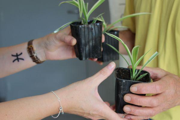 Le groupe Facebook Troque ta pante permet aux Rémois d'échanger ou de donner leurs plantes