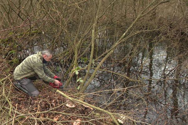 Plusieurs week-end dans l'année, des bénévoles du Conservatoire d'espaces naturels de Picardie nettoient les marais de Long dans la Somme.
