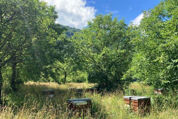 Les ruches de Florent Caullireau vont devoir déménager