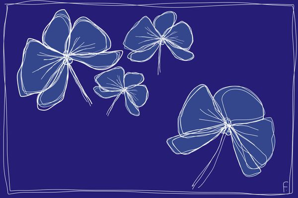 Version poétique de l'orchidée, proche cousine du papillon ?