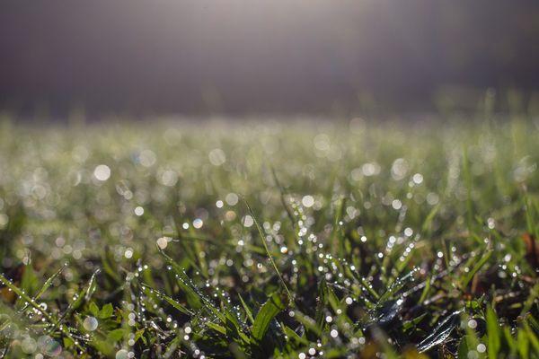 L'herbe gelée (image d'illustration).