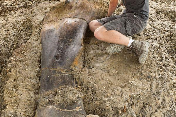 Maxime Lasseron, l'un des 70 fouilleurs du chantier, pose fièrement à côté du fémur de sauropode. C'est lui qui est tombé sur l'os le premier !