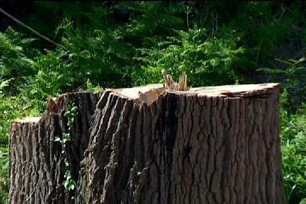 12 arbres, dont certains étaient centenaires, ont été abattus sur ce terrain privé.
