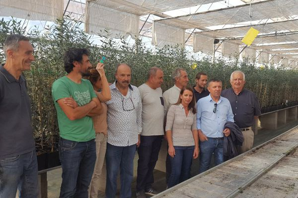 Xyllela - 30 à 40.000 plants d'oliviers produits en Corse vont être distribués