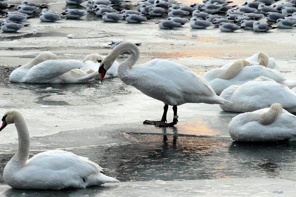 En 2012 déjà, les eaux du bassin Vauban, au Port du Rhin de Strasbourg, avaient gelé.