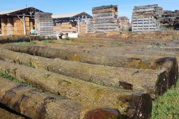 De très grandes grumes qui constitueront à terme la nouvelle charpente de Notre-Dame.