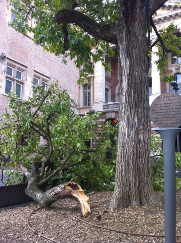 Une grosse branche s'est détachée d'un arbre derrière le Capitole