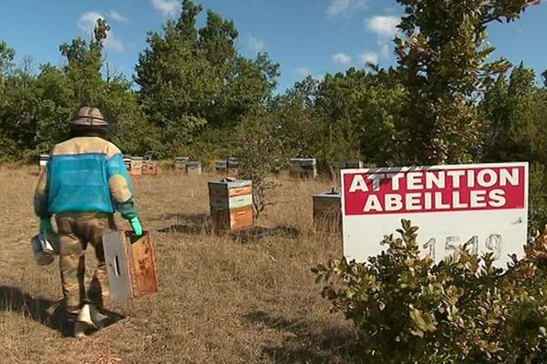 Le Cros (Hérault) - les abeilles ont souffert de la sécheresse - septembre 2019.