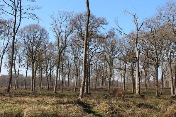 La forêt domaniale de Saint-Gobain (Aisne), près de Laon, à l'automne 2018.