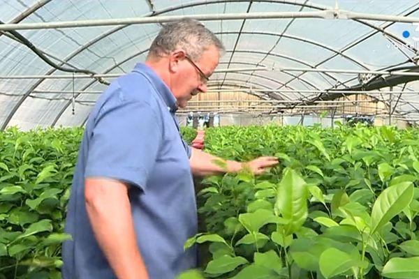 Marcel Luciani exportait la moitié de sa production d'agrumes en France avant l'arrêté d'interdiction d'exportation publié en 2018
