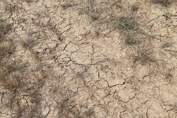Sol craquelé en bordure d'un champs de tournesol, à Talais en Gironde.
