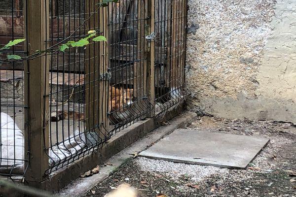Des dizaines de chats sont tenus derrière des barreaux dans une maison insalubre à Besançon.