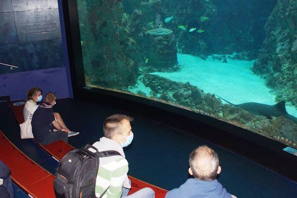 Le public a retrouvé la magie des aquariums géants d'Océanopolis