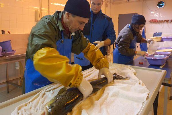 Le Conservatoire National du Saumon Sauvage, situé dans la Haute-Loire, s'efforce de ré-empoissonner l'Allier avec des bébés saumons depuis près de 20 ans.