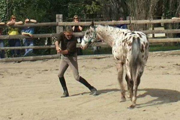 """Chris Irwin parle """"cheval"""" à Little, hongre de trois ans, particulièrement peureux - avril 2015"""