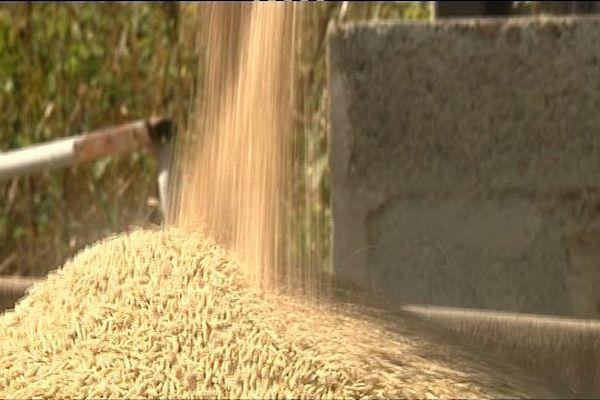 Le prix des céréales s'est envolé