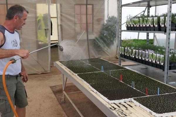 Philippe Chatagnier arrose les semis de salades