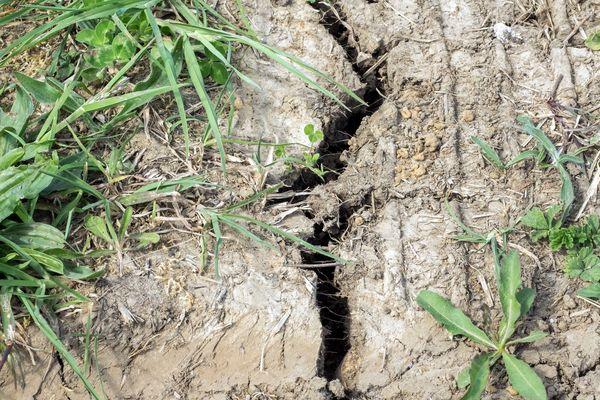 En vigilance sécheresse depuis le 30 avril, le département de la Drôme est passé en alerte sécheresse, un niveau encore plus grave, le 5 juin 2020.