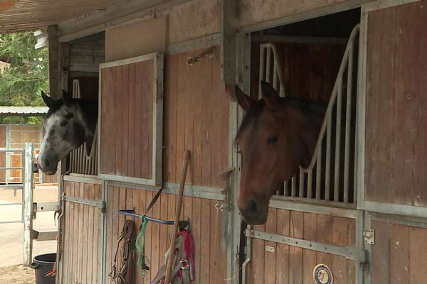 Touchés eux aussi par la crise, les centres équestres vont pouvoir bénéficier d'une aide exceptionnelle. On en compte plus de 300 en Picardie.