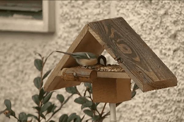 Une recrudescence d'oiseaux blessés a absorbé le budget du centre de sauvegarde de la faune sauvage.