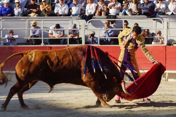 """Arles, lundi de Pâques 2017. """"Potrillo"""" de Pedraza de Yeltes dans la muleta de Morenito de Aranda. Mais c'est surtout face au cheval que cet exemplaire a brillé!"""