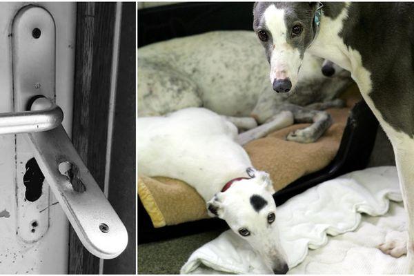 L'association Lianes a une vocation solidaire et a recours aux chiens pour aider les personnes démunies. (à droite, image d'illustration)