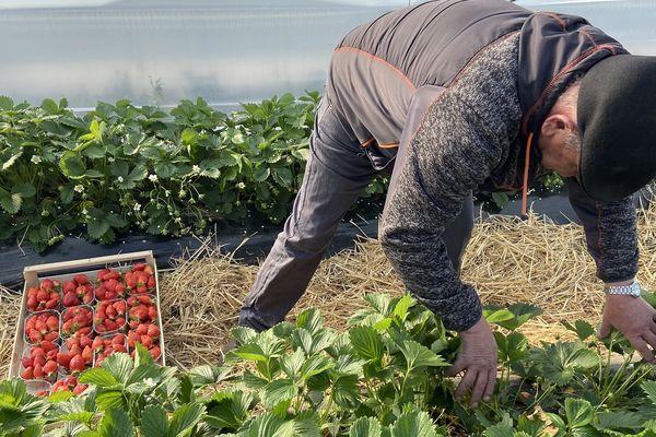 Sur son exploitation familiale, Jean-Pierre Roquecave s'active pour ramasser sa récolte.