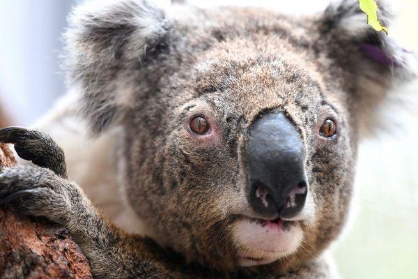 Le zoo de Mulhouse relaie l'appel aux dons de leur référent en Australie