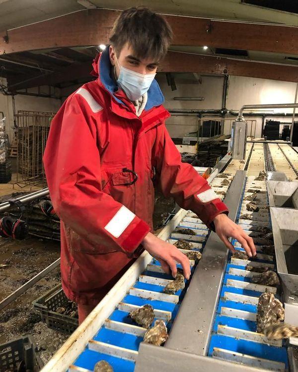 Marin, le  stagiaire qui a découvert la perle , en pleine immersion devant une machine de calibrage d'huîtres.
