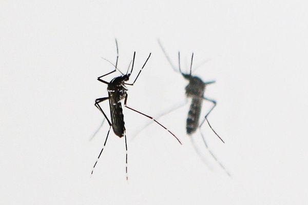 Dans l'Allier, les habitants sont invités à surveiller la présence de moustiques tigres et à les signaler à l'ARS.