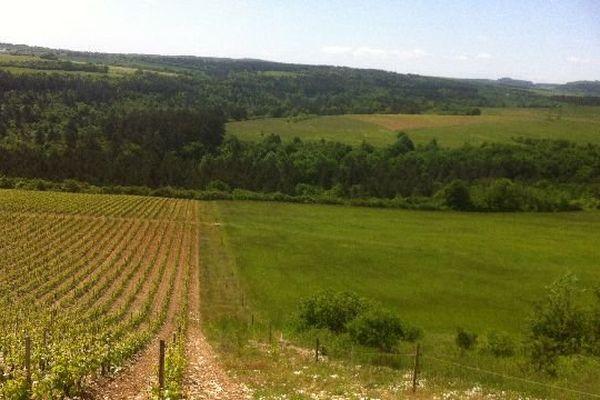Le domaine viticole du plateau de la Cras appartient à la communauté urbaine du Grand Dijon.