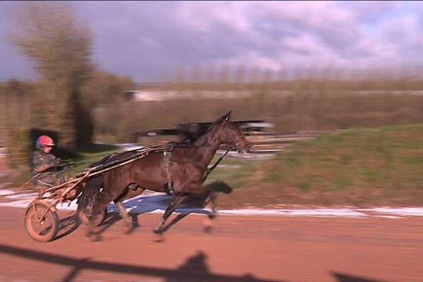 Au Ménil Bérard, dans l'Orne, Bold Eagle se prépare pour le prochain Prix d'Amérique