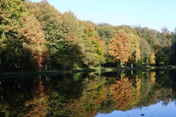 La forêt domaniale de Bellême est l'une des plus prestigieuses chênaies de France. Un livre vient d'être publié et fait le récit de son histoire, avril 2019.