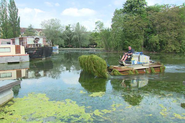Les faucardeuses coupent les algues qui prolifèrent à la surface du canal.