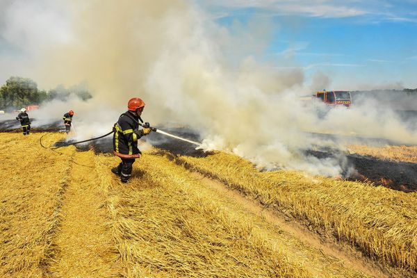 Une équipe de pompiers en train d'éteindre un feu de culture.
