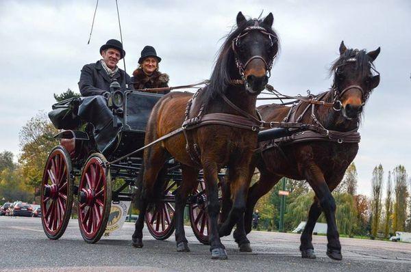 L'élégance rare des poneys Dartmoor.