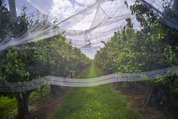 Pris dans leurs filets, deux arboriculteurs sont soupçonnés d'une fraude à la MSA proche de 3M d'euros.