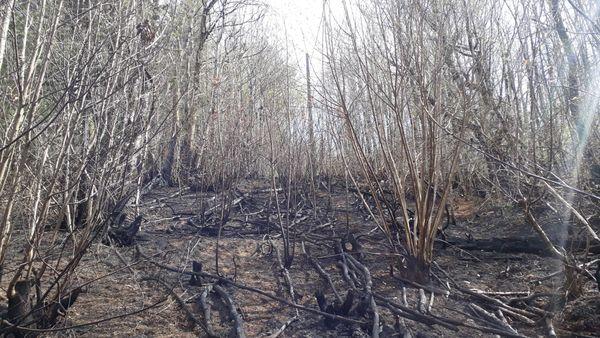Incendie en Corrèze en ce début avril 2020