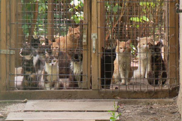 Des dizaines de chats non stérilisés continuent de se reproduire derrière ces cages.