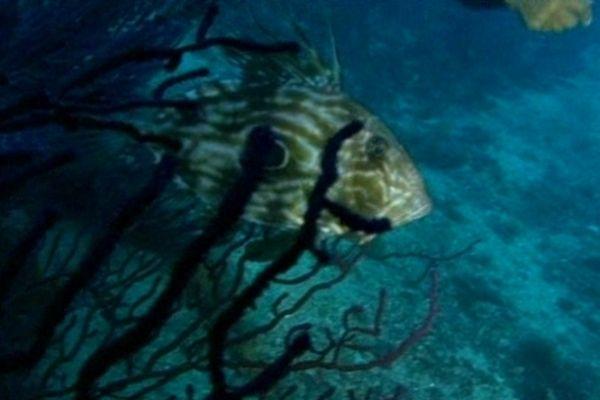 Le monde sous-marin est célébré pendant 4 jours à Marseille