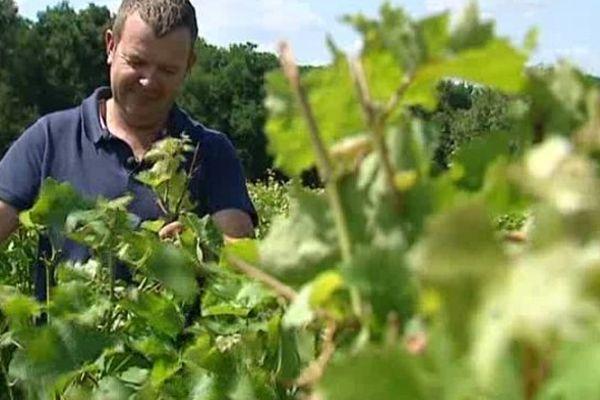 Denis Breussin, vigneron en AOC Vouvray (Indre-et-Loire).