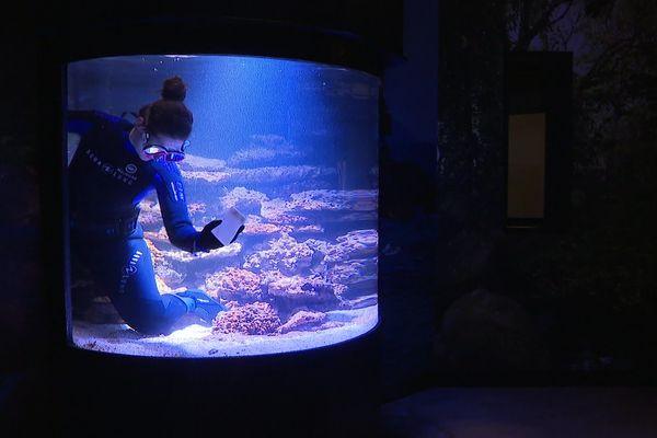 Aglaë Galtier prépare cet aquarium à l'arrivée d'un spécimen de Corail.