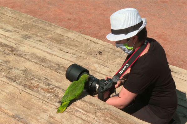Ce perroquet amazone se montre intrigué par cet appareil photo.