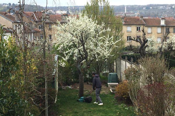 Tondre l'herbe au pied des arbres fruitiers, un des moyens de les protéger des gelées de printemps.