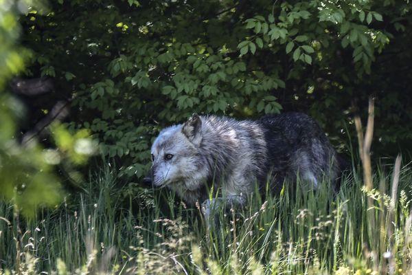 Les gendarmes du Loir-et-Cher sont partis à la chasse au loup-garou - Photo d'illustration