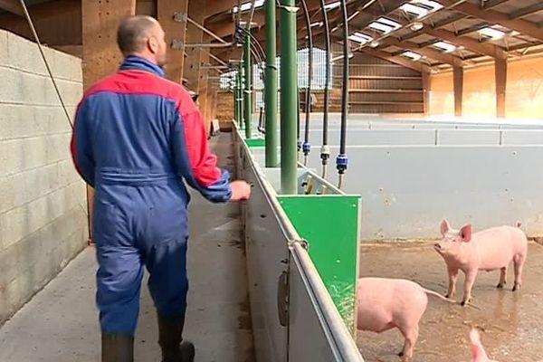 Marsais-Thénezay (Deux-Sèvres) - Olivier est éleveur de cochons bio - 2019.