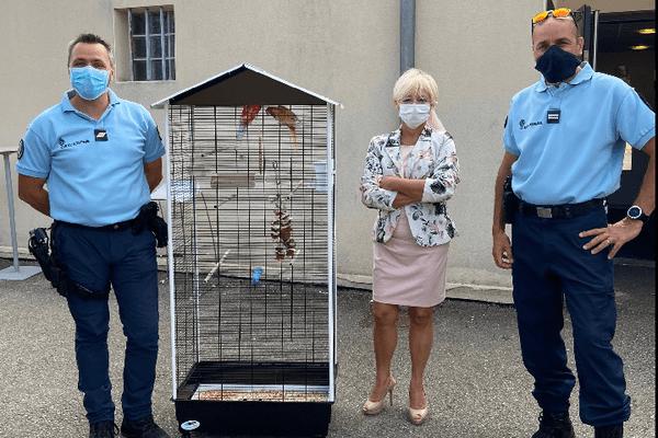 Les gendarmes ont remis ces perruches à un EHPAD, après les avoir saisies dans une affaire d'escroquerie.