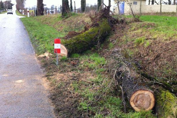 Un arbre s'est ce matin couché en travers de la route à Aixe-sur-Vienne