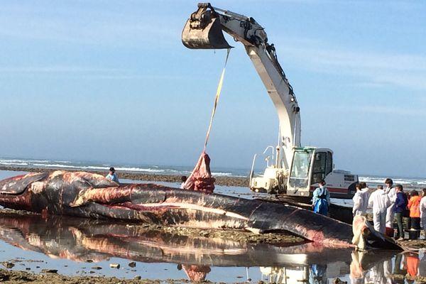 Une baleine s'est échouée en octobre dernier sur une plage d'Ars-en-Ré (Charente-Maritime)