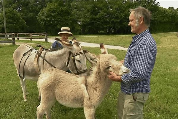 Les ânes en concours à Bruz (35)